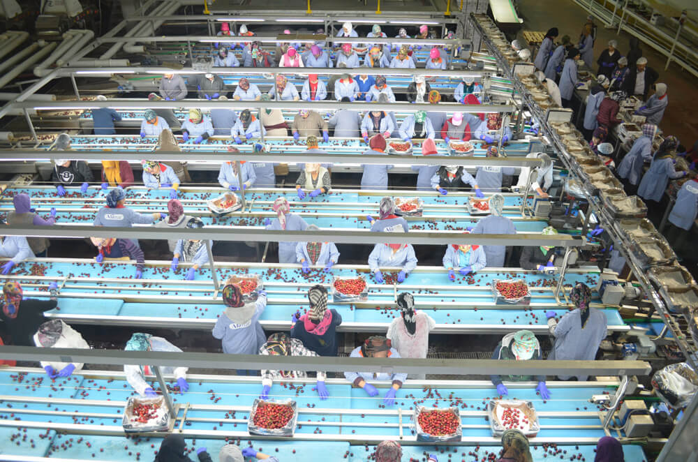 Alanar Fruit Invests In State-Of-The-Art Technology To Pick Perfect Cherries